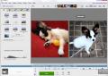 برنامج بيكاسا Picasa 3.9.138.151 لمعالجة وتحرير الصور الرقمية